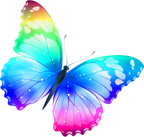 Colorful butterfly PNG image